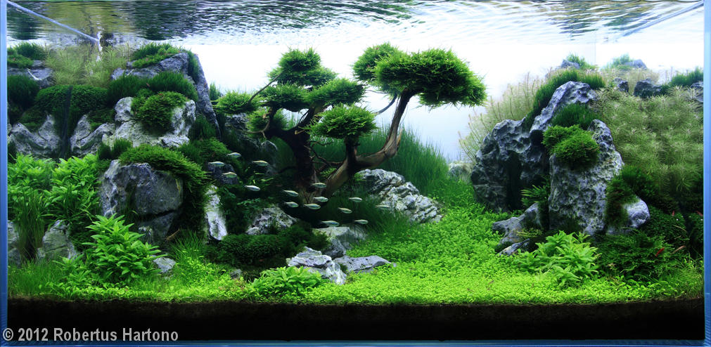 The Ancestry of Aquascaping is in Bonsai K.O.I.