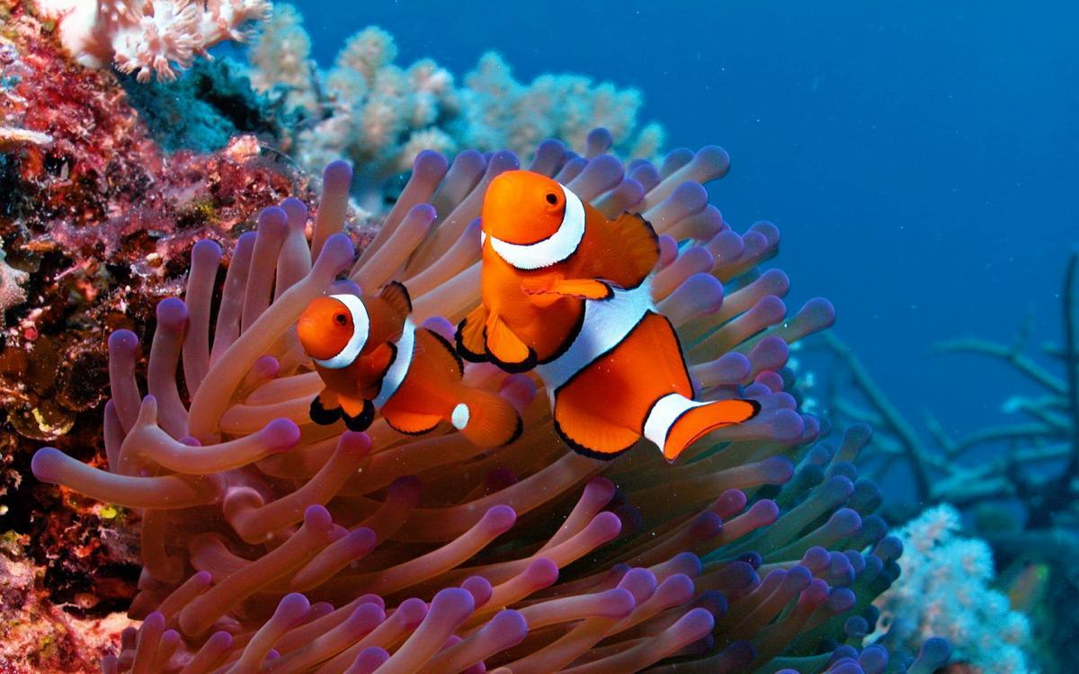 Finding Nemo\'s Gender | K.O.I.