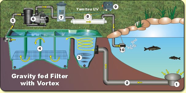 Filter maturation k o i for Pond water purification system