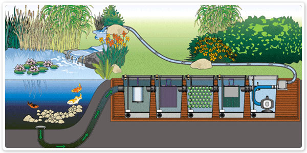 Adequate flow thru a bioconverter k o i for Koi fish pond filter system