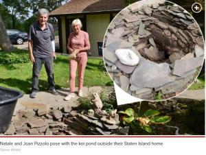 Staten Island man gets stuck head-first in empty koi pond